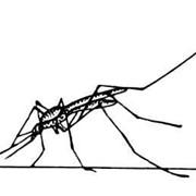 Борьба с комарами на открытой местности с помощью ловушек Mosquito Magnet фото