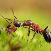 Борьба с муравьями фото