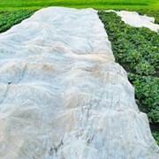 Агроволокно белое фото