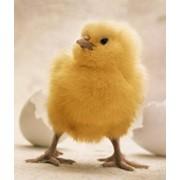 Источник белка для птицы НР Avistart Hamlet Protein фото