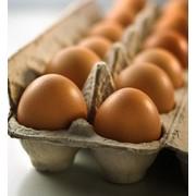 Яйца домашней птицы для потребления фото