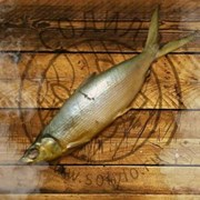 Молочная рыба холодного копчения 800+ фото