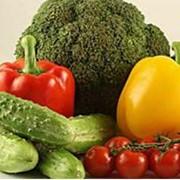 Выращивание овощных культур. фото