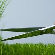 Услуги по покосу, скашиванию травы, бурьяна фото