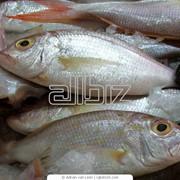 Продажа свежемороженой рыби фото