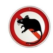 Уничтожение крыс профессиональное фото