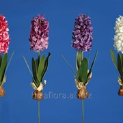 "Цветок искусственный ""Гиацинт с луковицей"" арт. AJ62140 фото"
