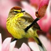 Птицы экзотические фото