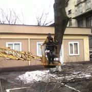 Укрепление дерева фото