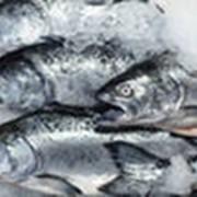 Рыба мороженная фото