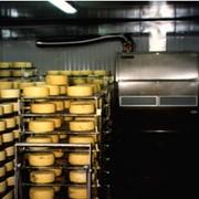 Камера вызревания сыров фото