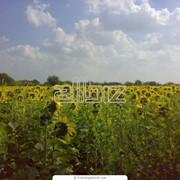 Авторский надзор в сельском хозяйстве фото