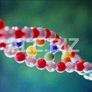 Лечение инфекционных болезней ДНК-исследований фото