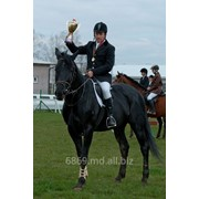 Спортивные лошади фото