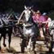 Прокат тройки лошадей фото