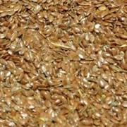 Лен масличный фото