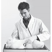 Консультации ветеринарные. фото