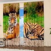 """Фотошторы """"Суровый тигр"""" фото"""