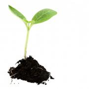Растениеводства фото