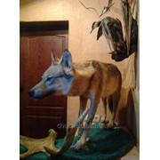 Полноростовой волк (экспозиция ) фото