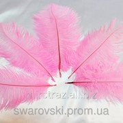 Перо страуса. Цвет Cветло-розовый. Размер 15-20cм. (1шт.) ПС15-09 фото
