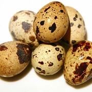 Перепелиное яйцо фото