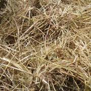 Сено суданской травы - 1200 грн/т фото