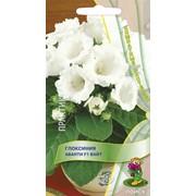 Семена комнатного растения Глоксиния Авати Вайт фото