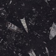Мрамор Black Fossil №3 фото