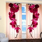 """Фотошторы """"Пурпурная орхидея"""" фото"""