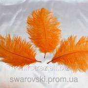 Перо страуса. Цвет Оранжевый. Размер 15-20cм. (1шт.) ПС15-07 фото