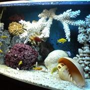 Обслуживание морских аквариумов фото