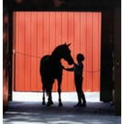 Постановка (снятие) лошади на карантин, с вызовом районного ветеринарного врача фото
