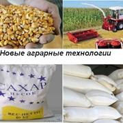 Сельхозпродукция опт Сахар песок от производителя в мешках по 50 кг. Кукуруза кормовая сухая . Самовывоз фото