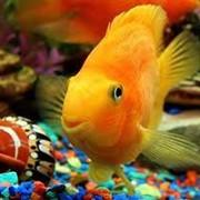Рыбы аквариумные другие фото