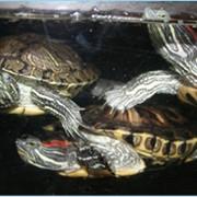 Выставка черепах фото