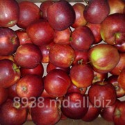 Яблоки Джонагоред на экспорт фото
