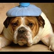 Ветеринария фото