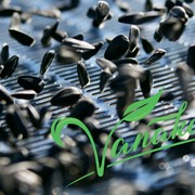 Калибровка семян подсолнечника фото
