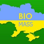 Организация и проведение международной конференции 'Энергия из биомассы' фото