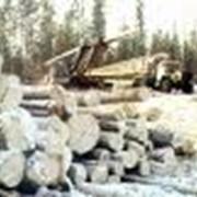 Аренда помещений по древесине фото
