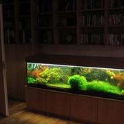 Аквариум с растениями или палюдариум фото