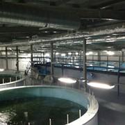 Строительство и запуск рыбных хозяйств, Строительство фото