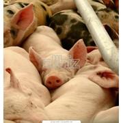 Консервы мясные фото