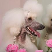 Стрижка собак всех пород фото