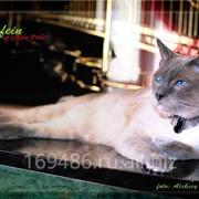 Кошки домашние фото