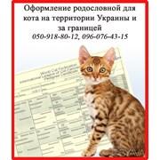 Оформление родословной для кота  фото