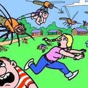 Обработка участка от комаров, мошек  фото