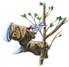 Весенняя обрезка/обработка деревьев Балашиха в Московской ... | 217x224