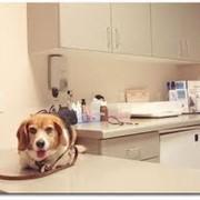 Диагностика и обследование животных. фото